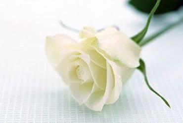 Ý nghĩa hoa hồng trong ngày kỷ niệm, ngày lễ tình nhân